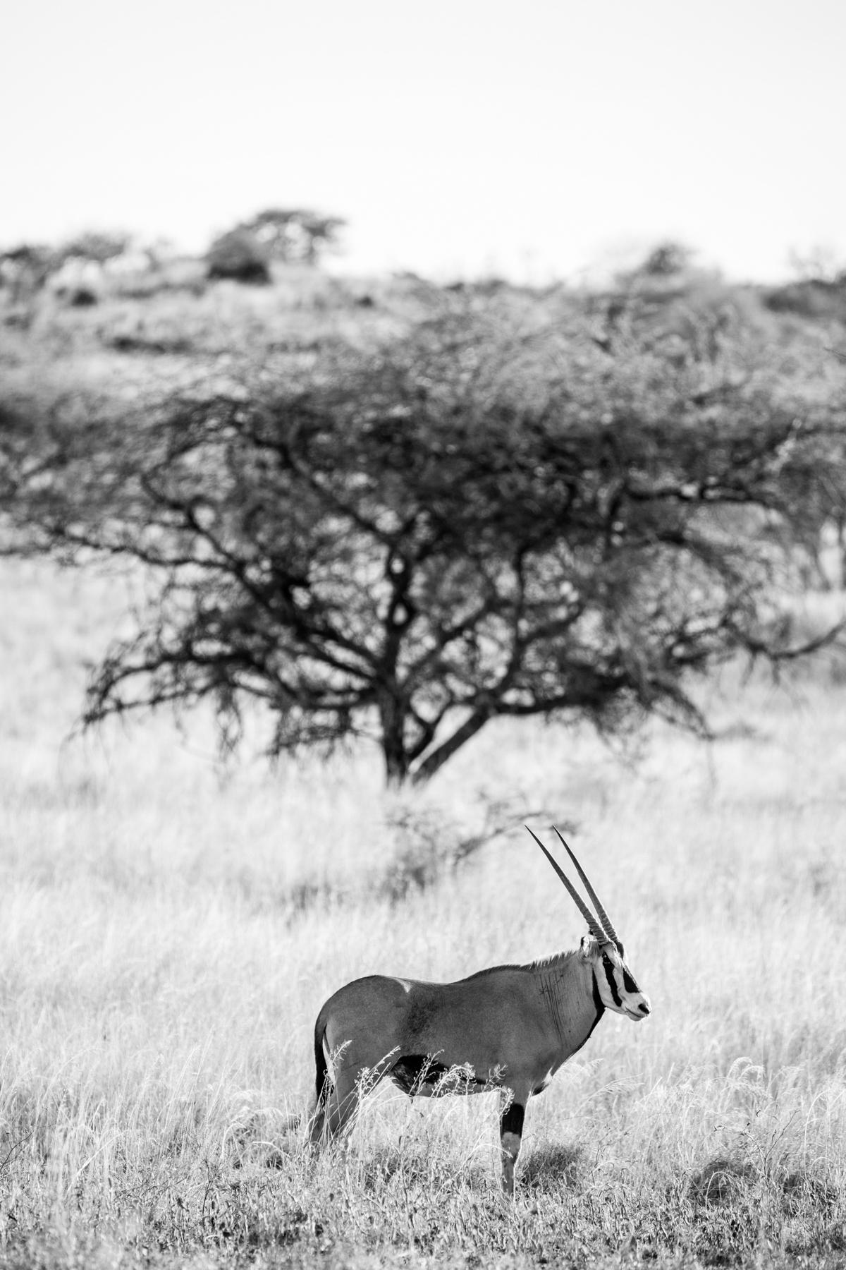 KenyaFeb2019_Safari-61.jpg
