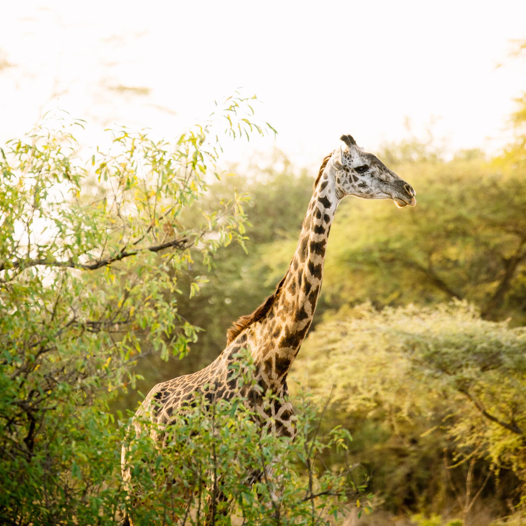 KenyaFeb2019_Safari-99.jpg