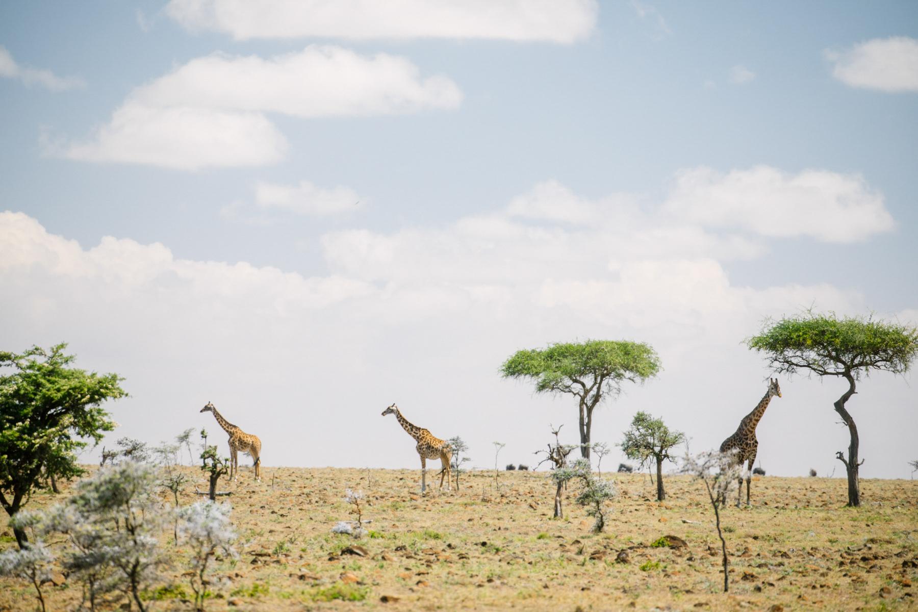 KenyaFeb2019_Safari-103.jpg