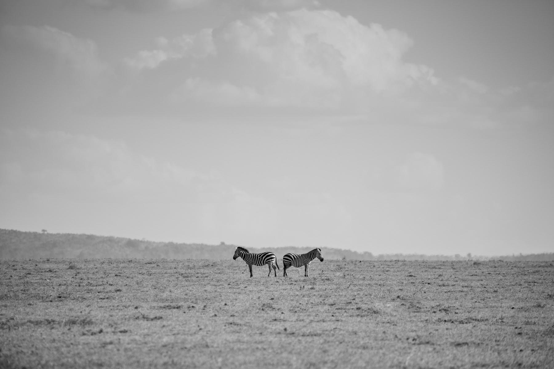 KenyaFeb2019_Safari-111.jpg