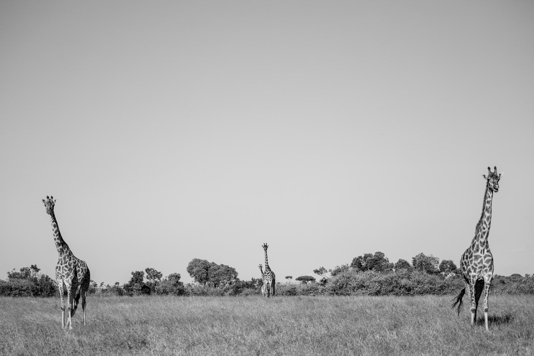 KenyaFeb2019_Safari-109.jpg
