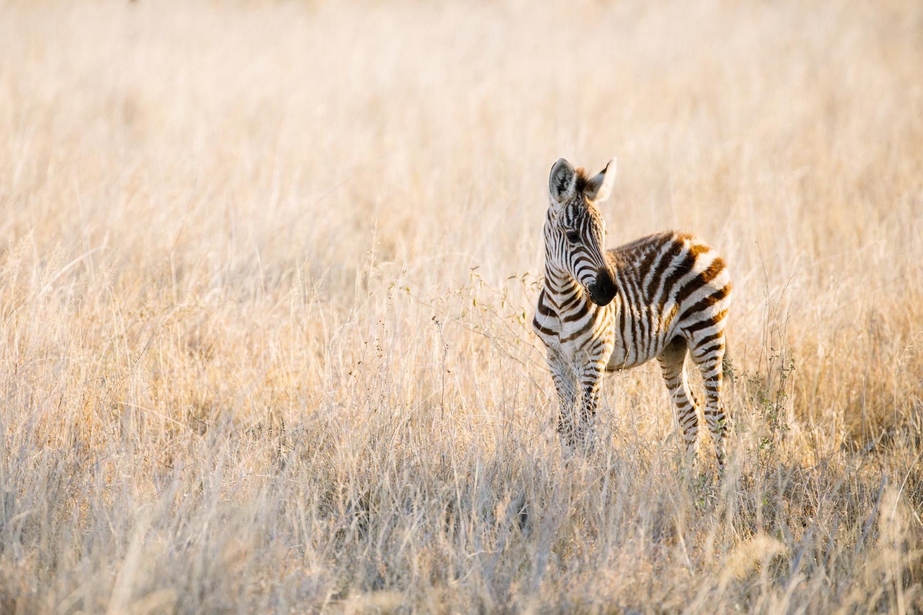 KenyaFeb2019_Safari-115.jpg