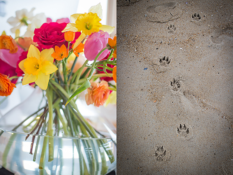 The beach house was decorated with gorgeous, cheery, sunny flowers, and while out on the beach, I couldn't help but snap a quick photo of the puppy prints in the sand!