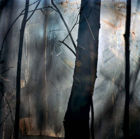 """""""The Forest"""" by Krista Steinke"""