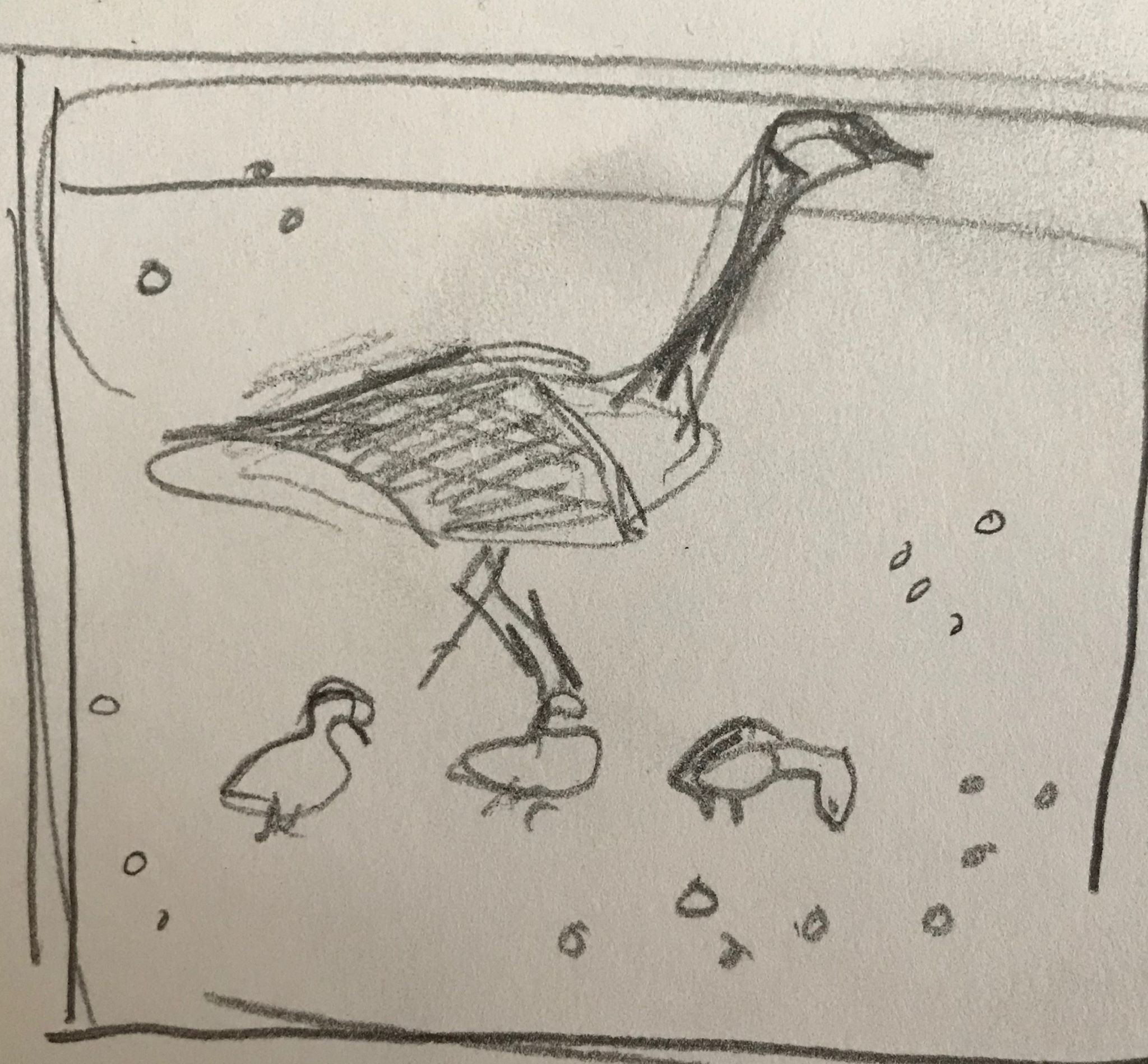 Sketch of a family of geese,  pencil on paper, 4x4 inches