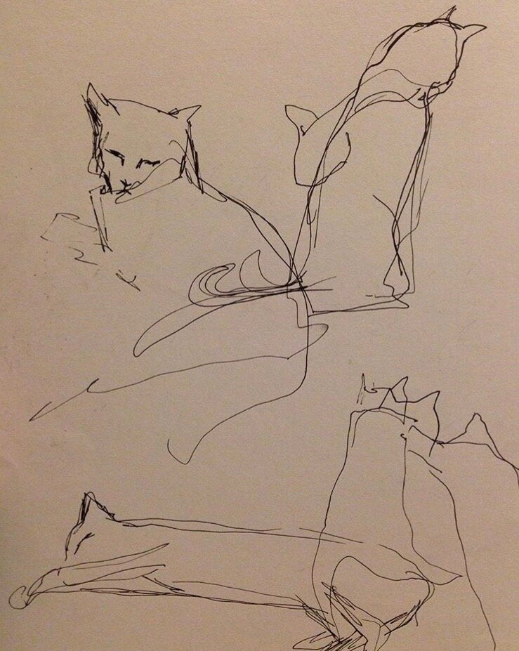 Cat sketches. (pen and paper)