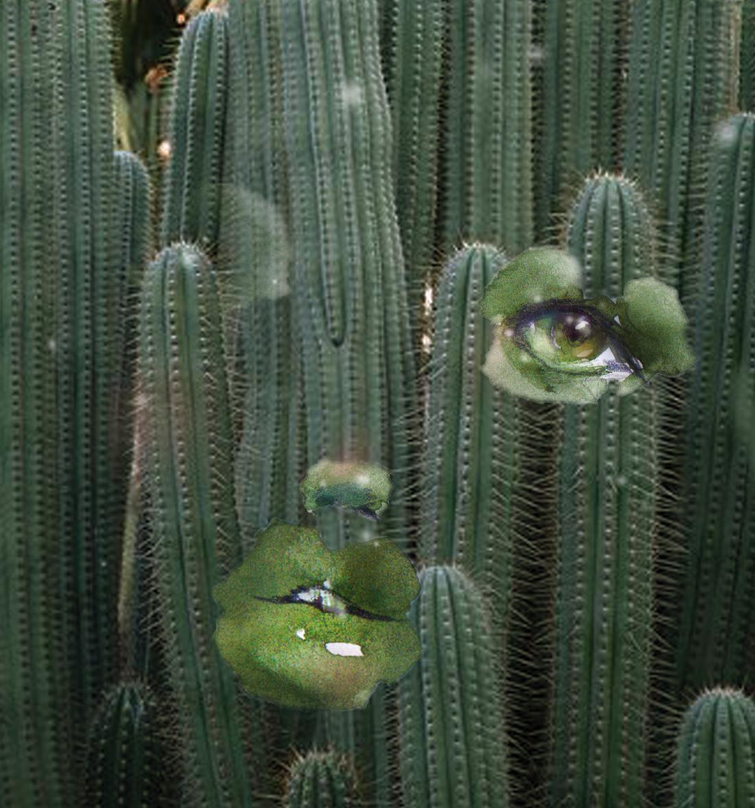 cactusface.jpg