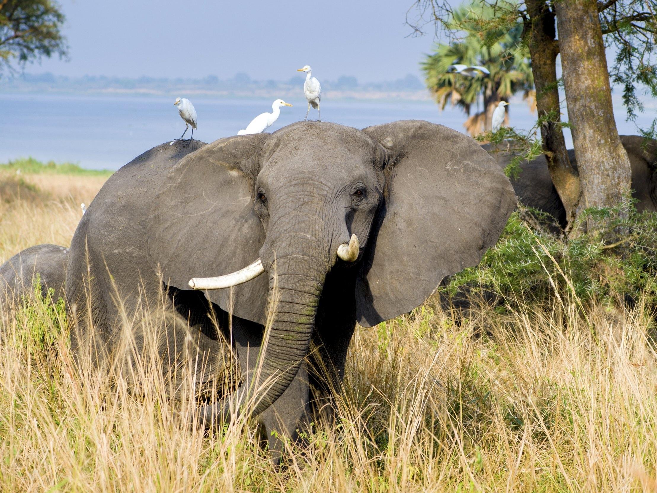 elephant-2108855.jpg