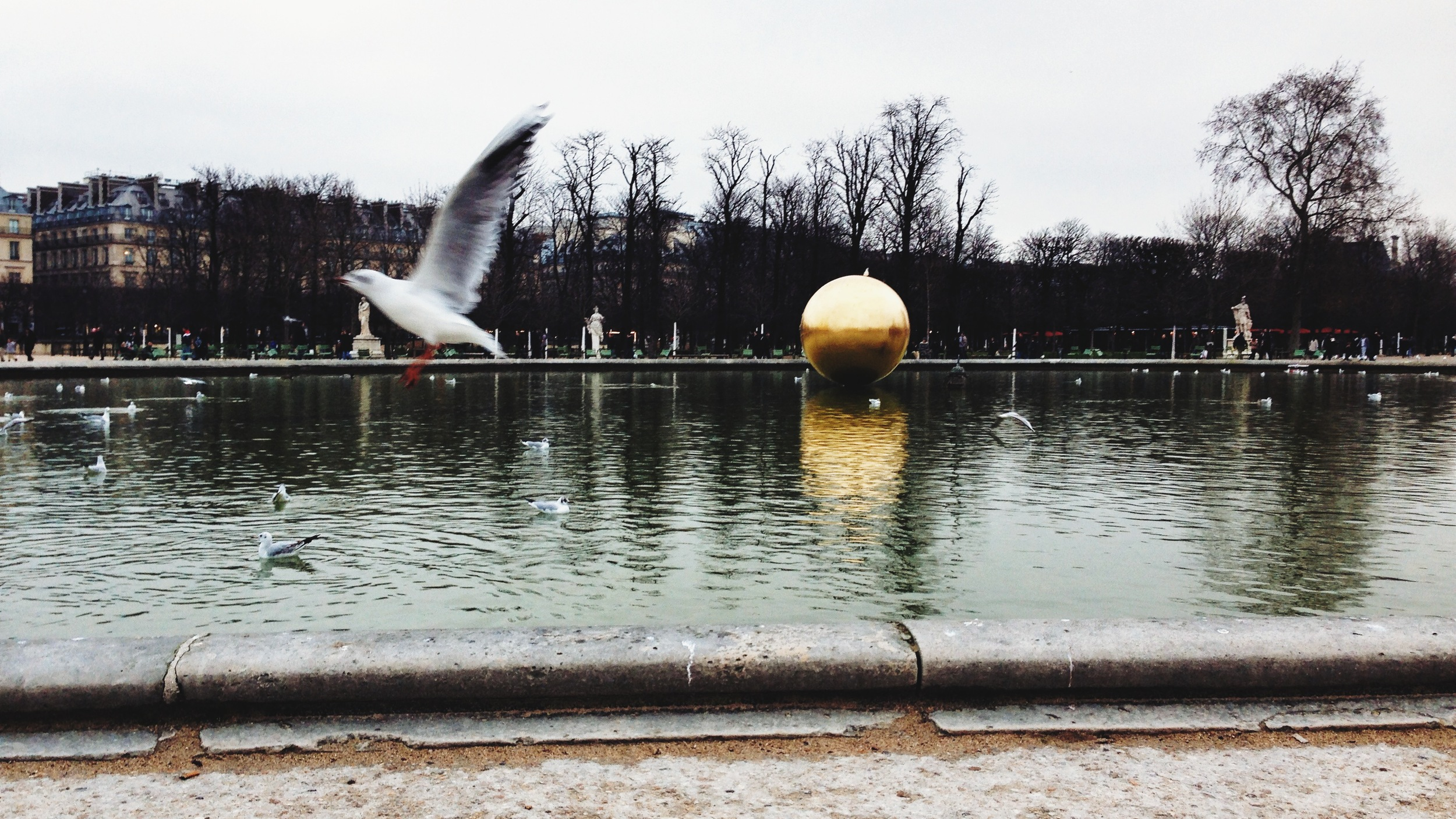 Taking flight at the Jardin des Tuileries