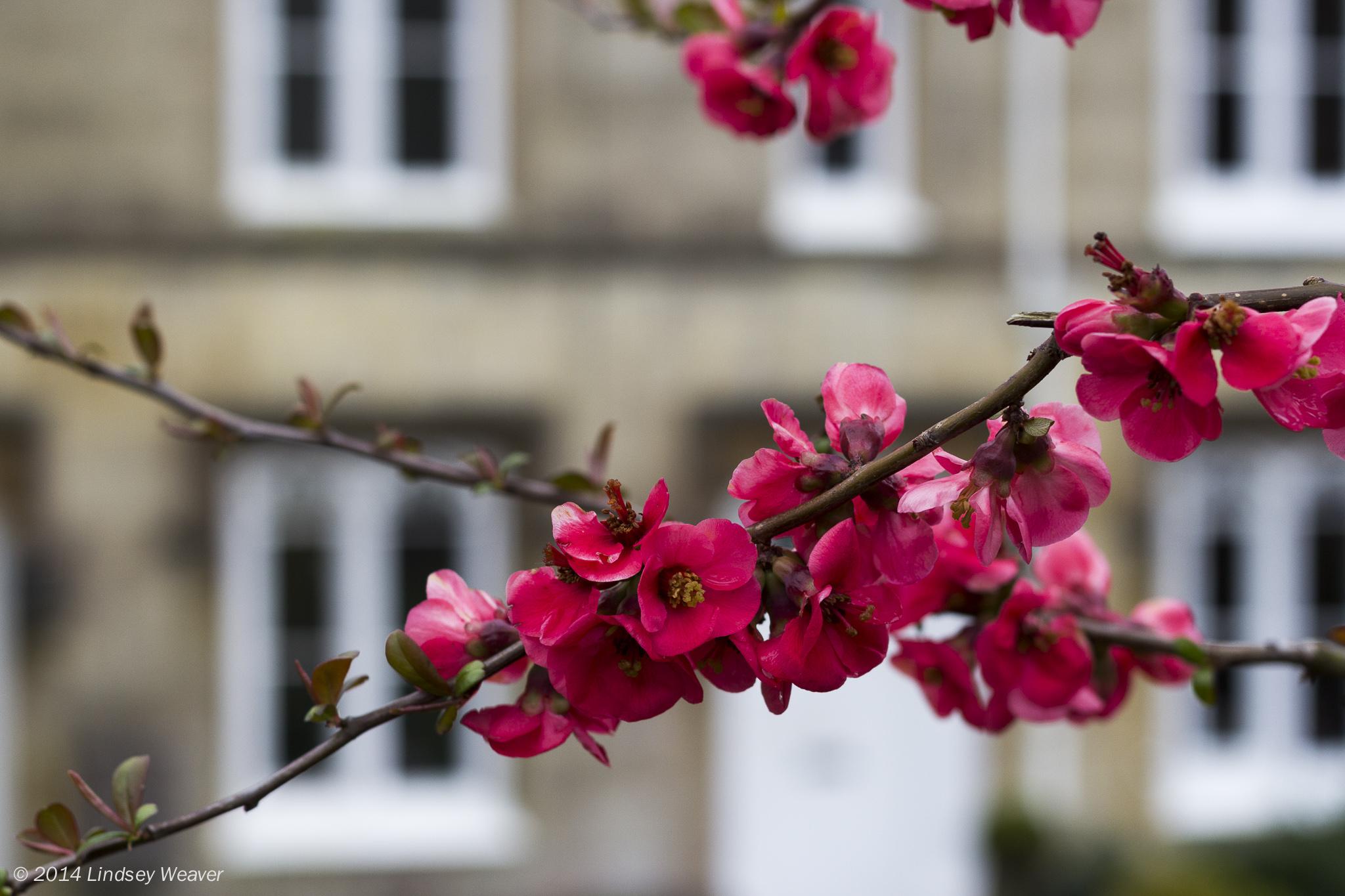 Springtime in Bath