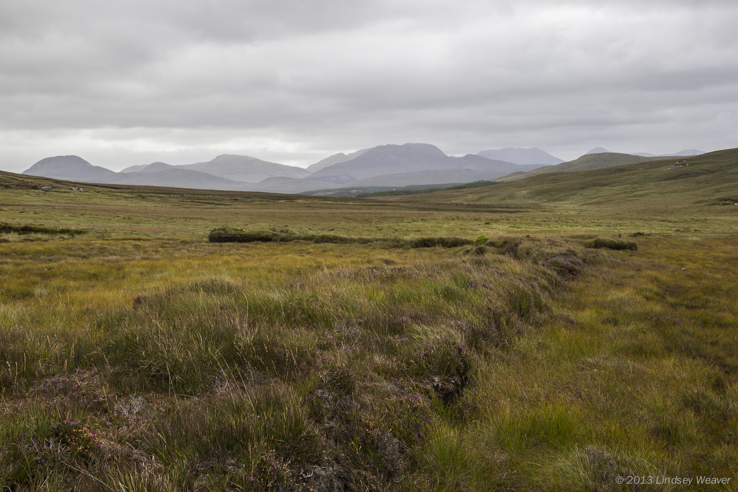 Remnants of peat