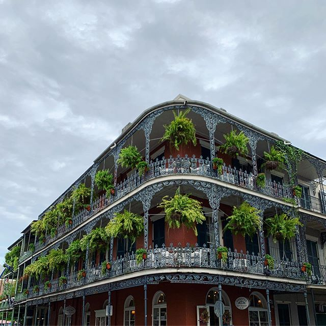 Green drapery. | French Quarter, New Orleans (17-18 August 2019) ||| #ferndrapery #neworleansferns #frenchquarterferns #neworleansarchitecture #nolaarchitecture #clarendonfilter #frenchquarter #nola #neworleans
