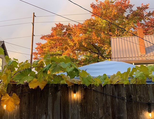Autumn, #nofilter. | Everett, WA (19 October 2019) ||| #autumn #autumnal #fallcolor #backyardparty #ThisIsEverett #everettwa #e❤️erett #PNW #PacificNorthwest #XPNW #pnwconnect #pnwonderland