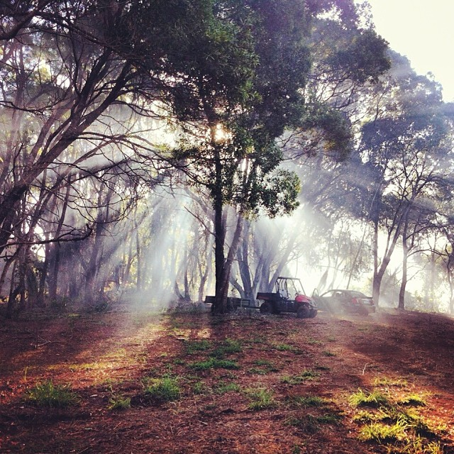 7th December 2013: Burn off smoke in the Bollywood forest at the bottom of the property.