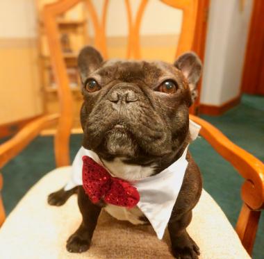 Anthony, the Parish Pup
