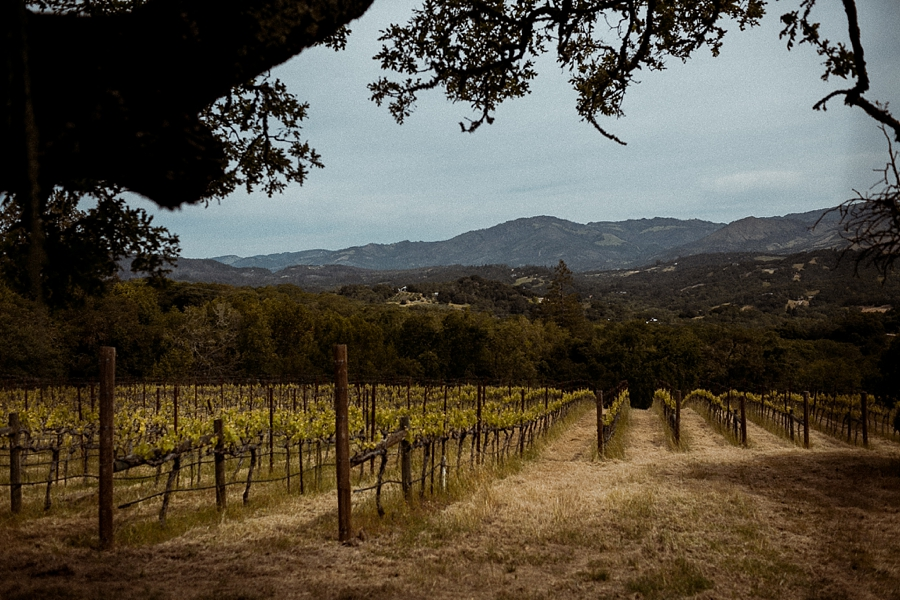 Glen-ellen-california-wedding-abi-q-photography-_0100.jpg