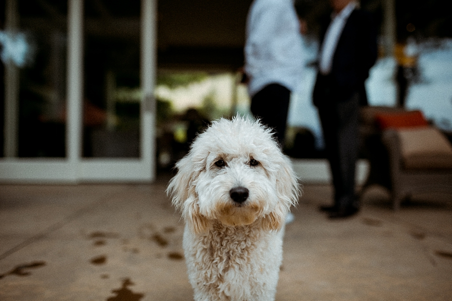 Glen-ellen-california-wedding-abi-q-photography-_0162.jpg