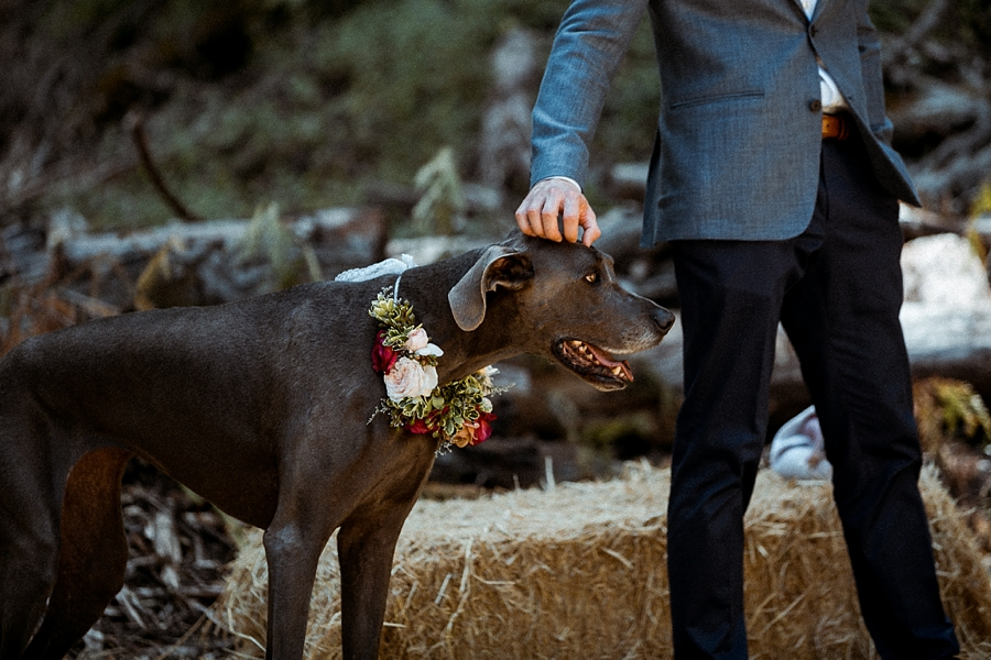 -sabor-mexicano-farm-wedding-guerneville-Abi-Q-photography-_0119.jpg