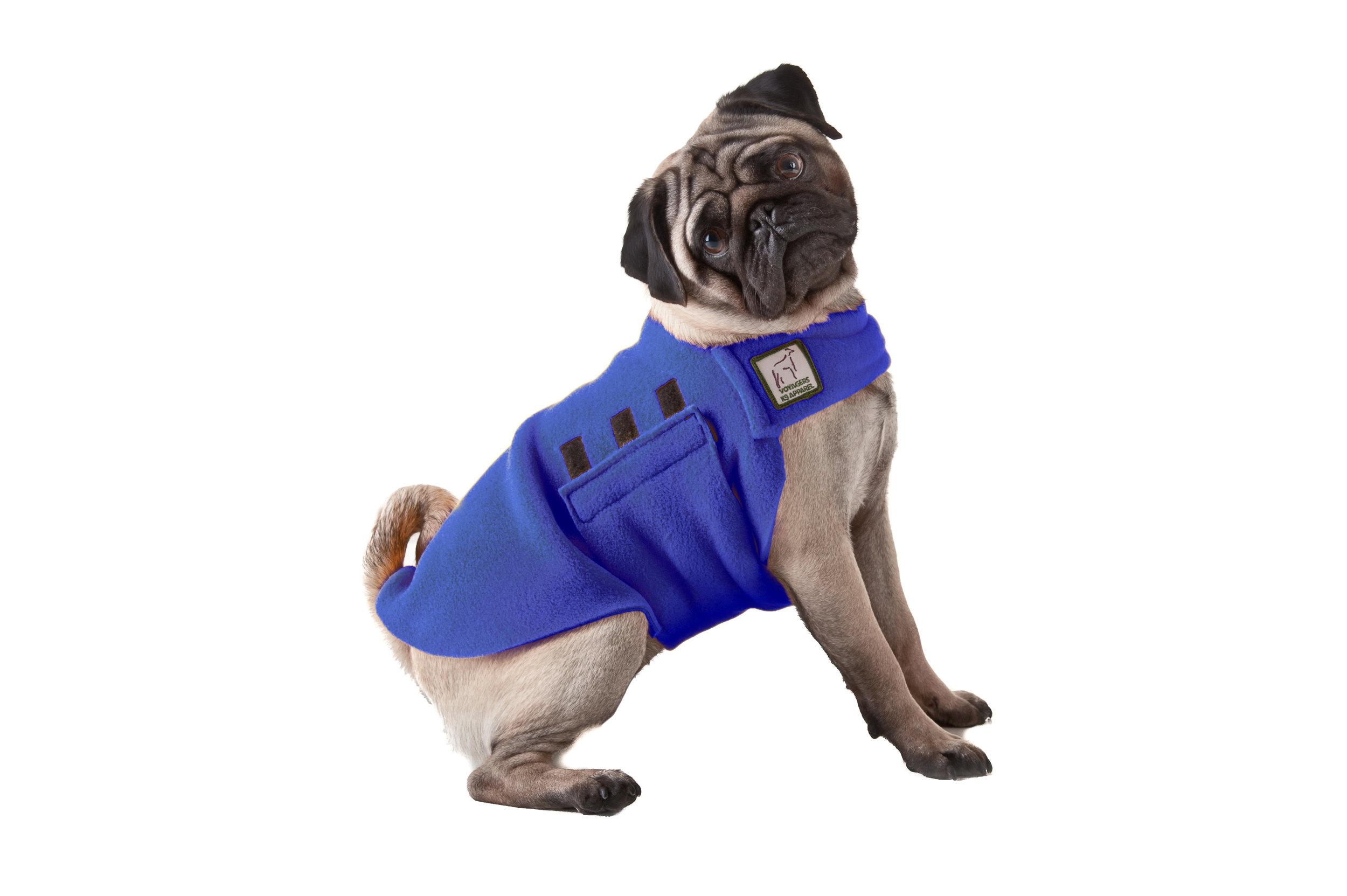 Image.Pug.Blue.jpg