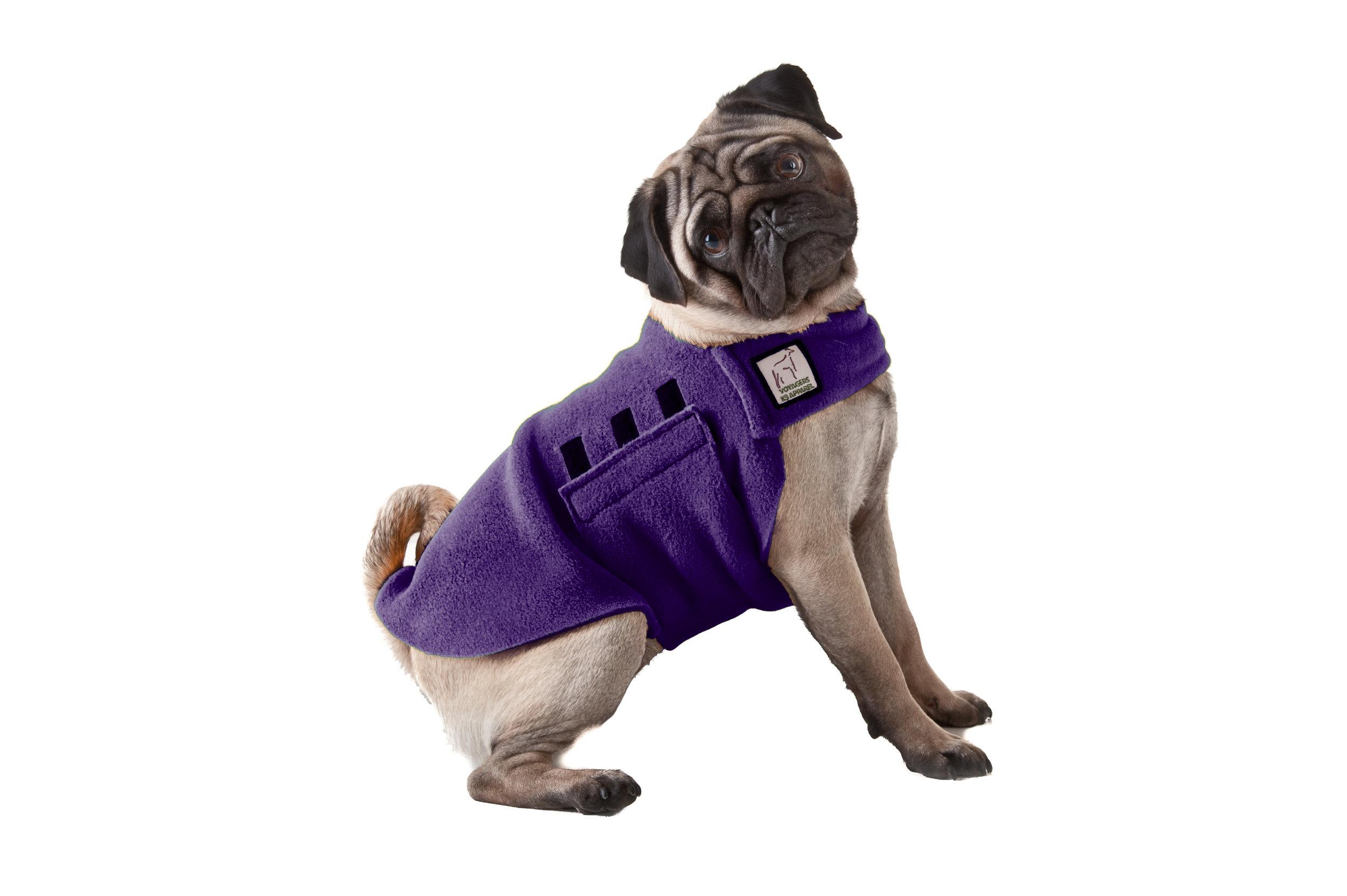 Image.Pug.purple.jpg