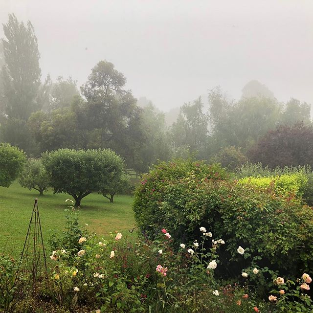 Beautiful foggy afternoon after a 'Rainy Red Hill' day!