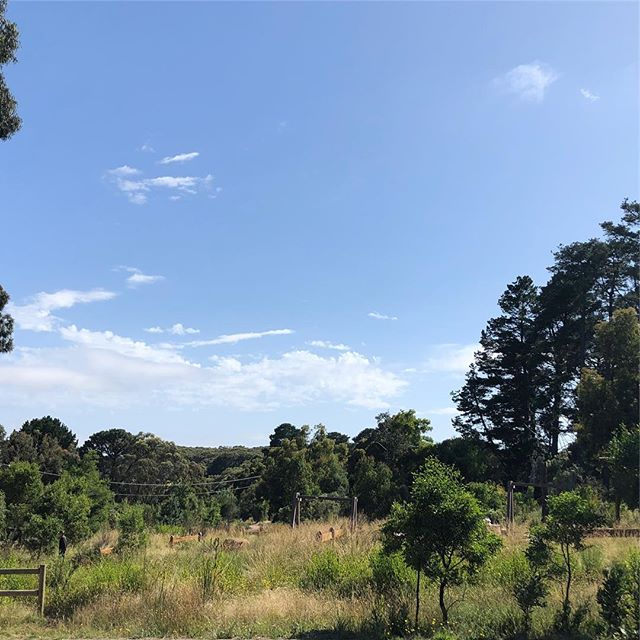 Looking at this view you wouldn't know just how many cars are parked in every available, and technically not available (😬), spot on the roads all around!! #visitredhill #redhillsouth #redhill #mornintonpeninsula #summer