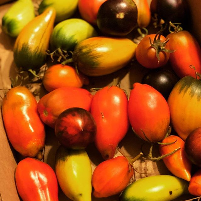 Nothing better than tomatoes straight from the vine. #visitredhilll #redhill #morningtonpeninsula #tomatoes #tomato