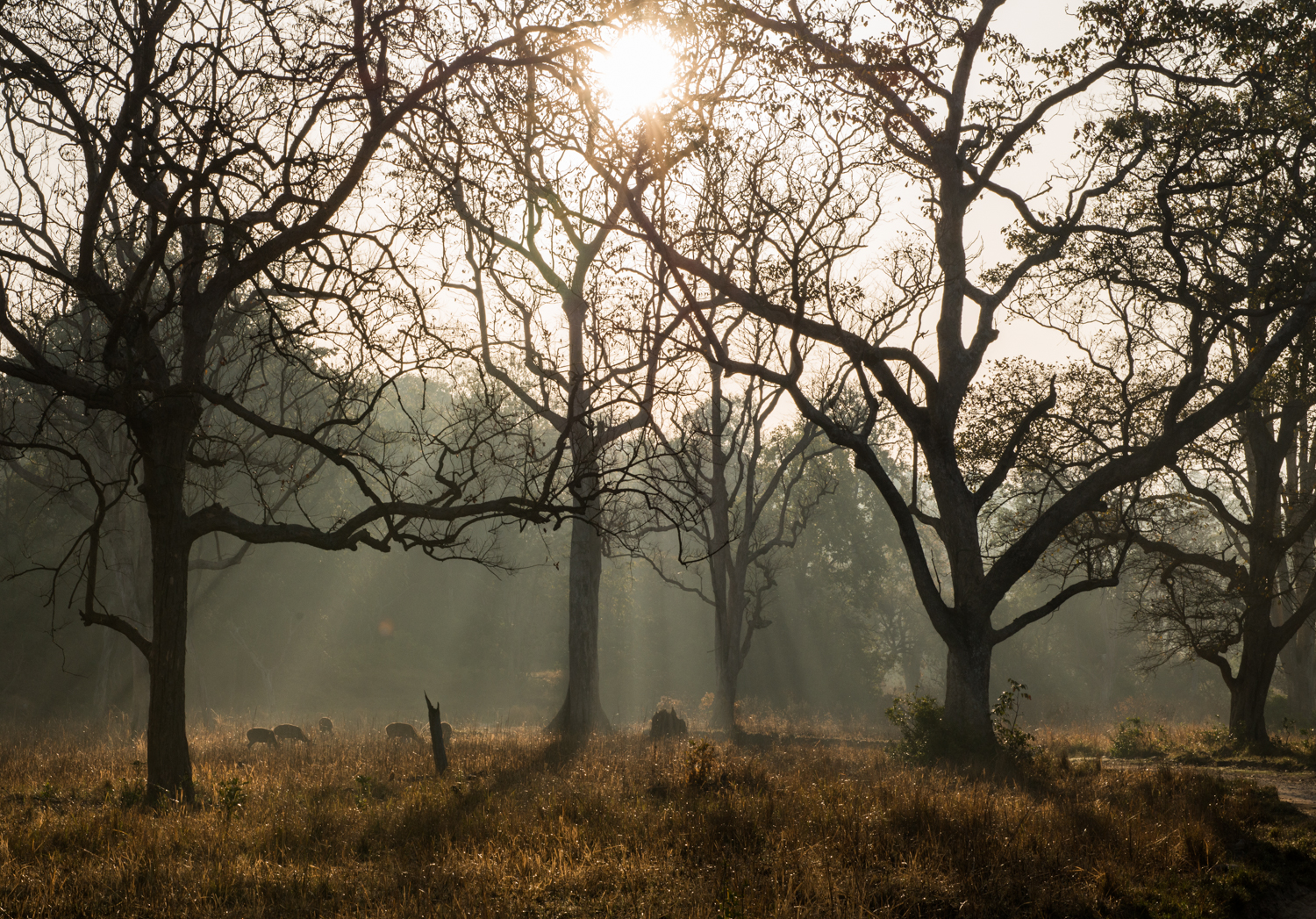 Rays of light permeate the trees and illuminate the wildlife below at the Corbett Tiger Reserve - Ramnagar, India.