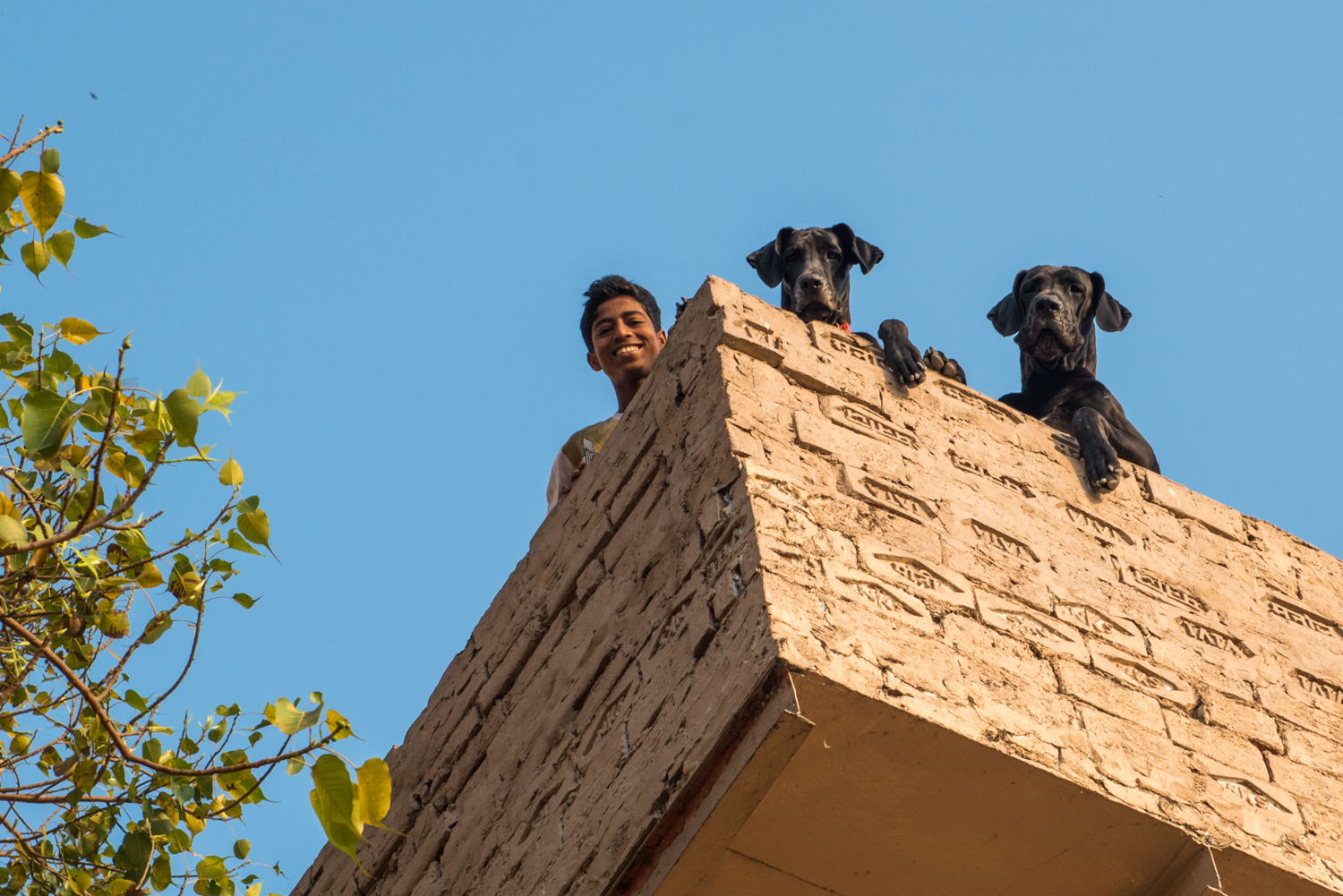 A boy and his two dogs playfully look down below from the rooftop of their home - Uttar Pradesh, India.