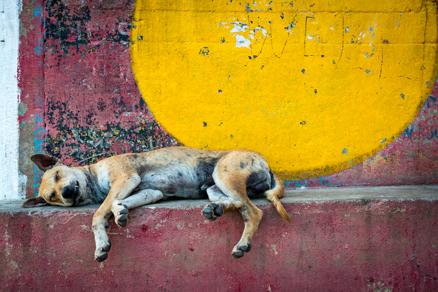 A dog rests unbothered by his busy surroundings - Varanasi, India.