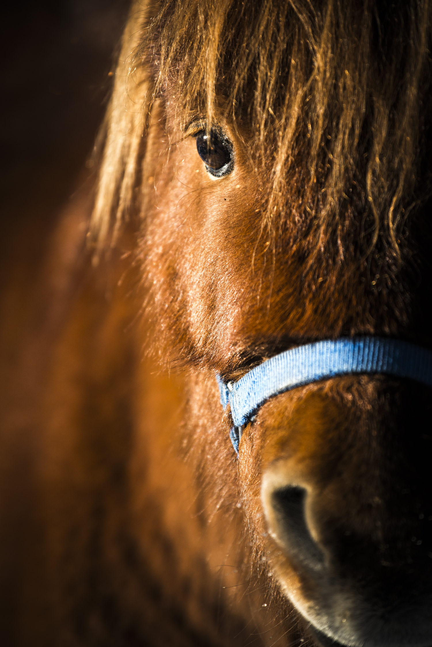 A horse gets close and personal - Banff, Alberta.