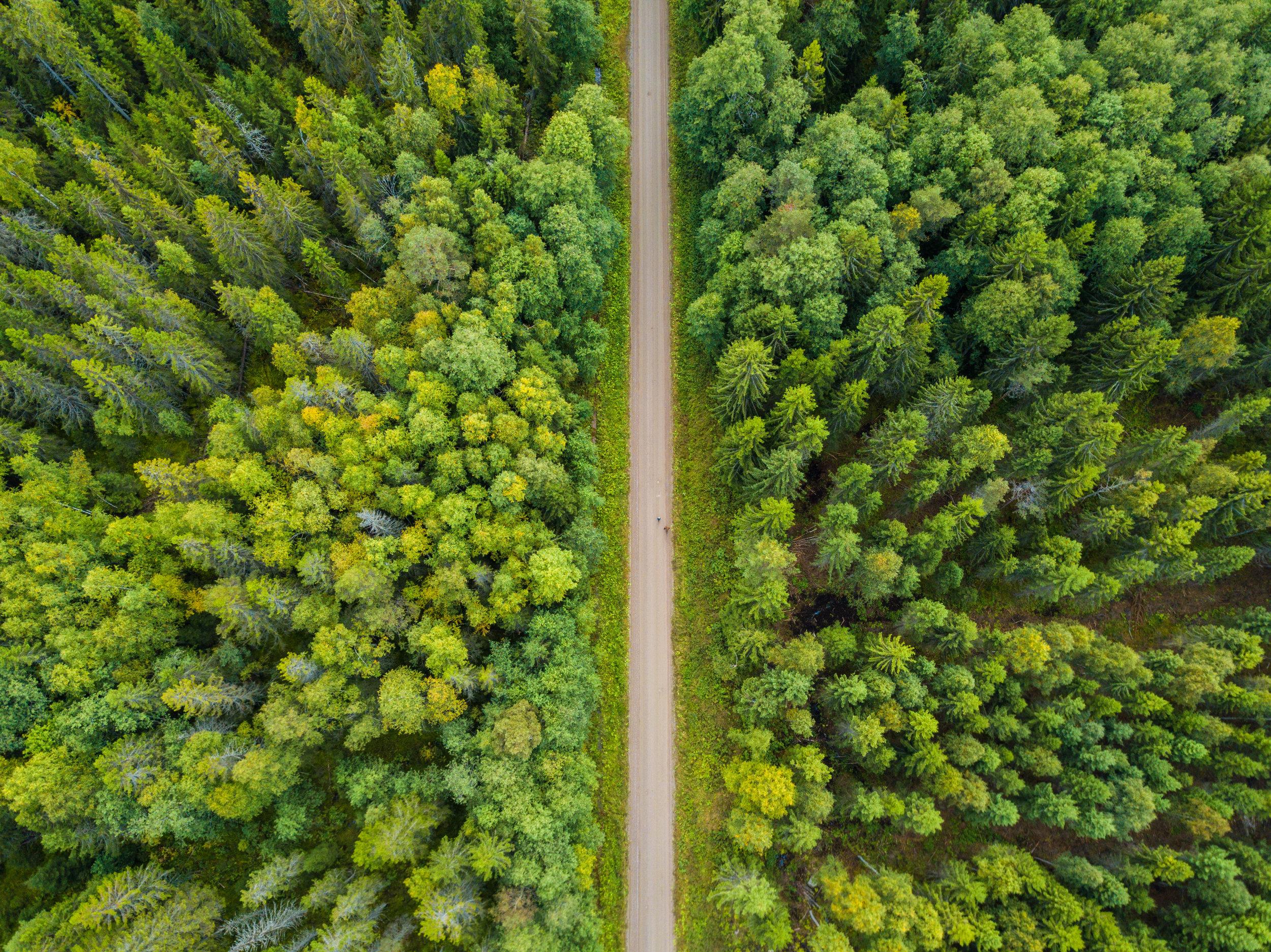 sweden-forest-road-Photo-by-Aaron-Minks-DJI_0081.jpg