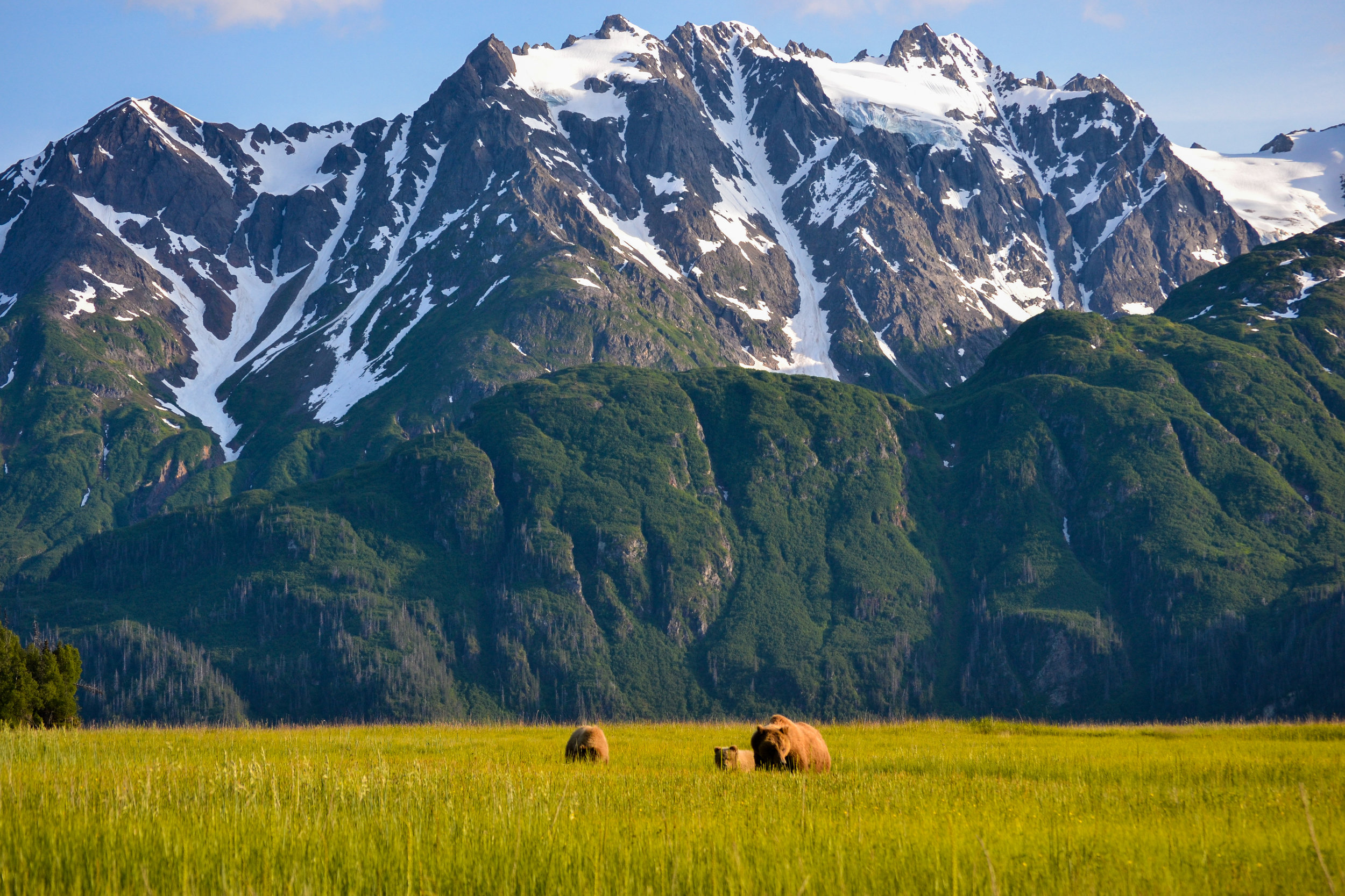 Alaska-bears-grizzly-Photo-by-Aaron-Minks-DSC_1181.jpg