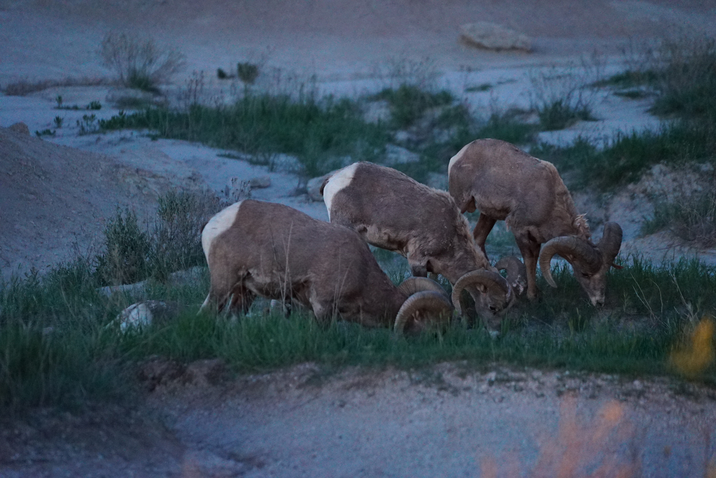 While scoping out locations in The Badlands, we encountered some of its inhabitants.