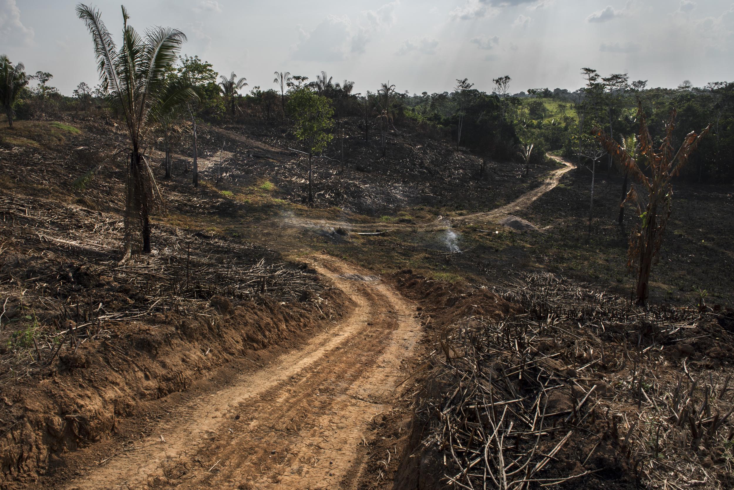 The Fading Amazon
