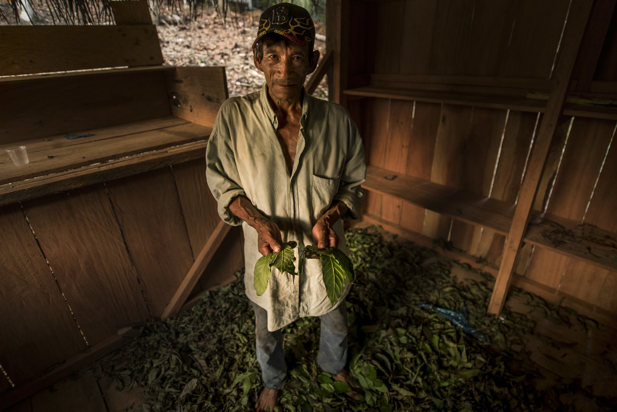 A local showing his Chacruna harvest