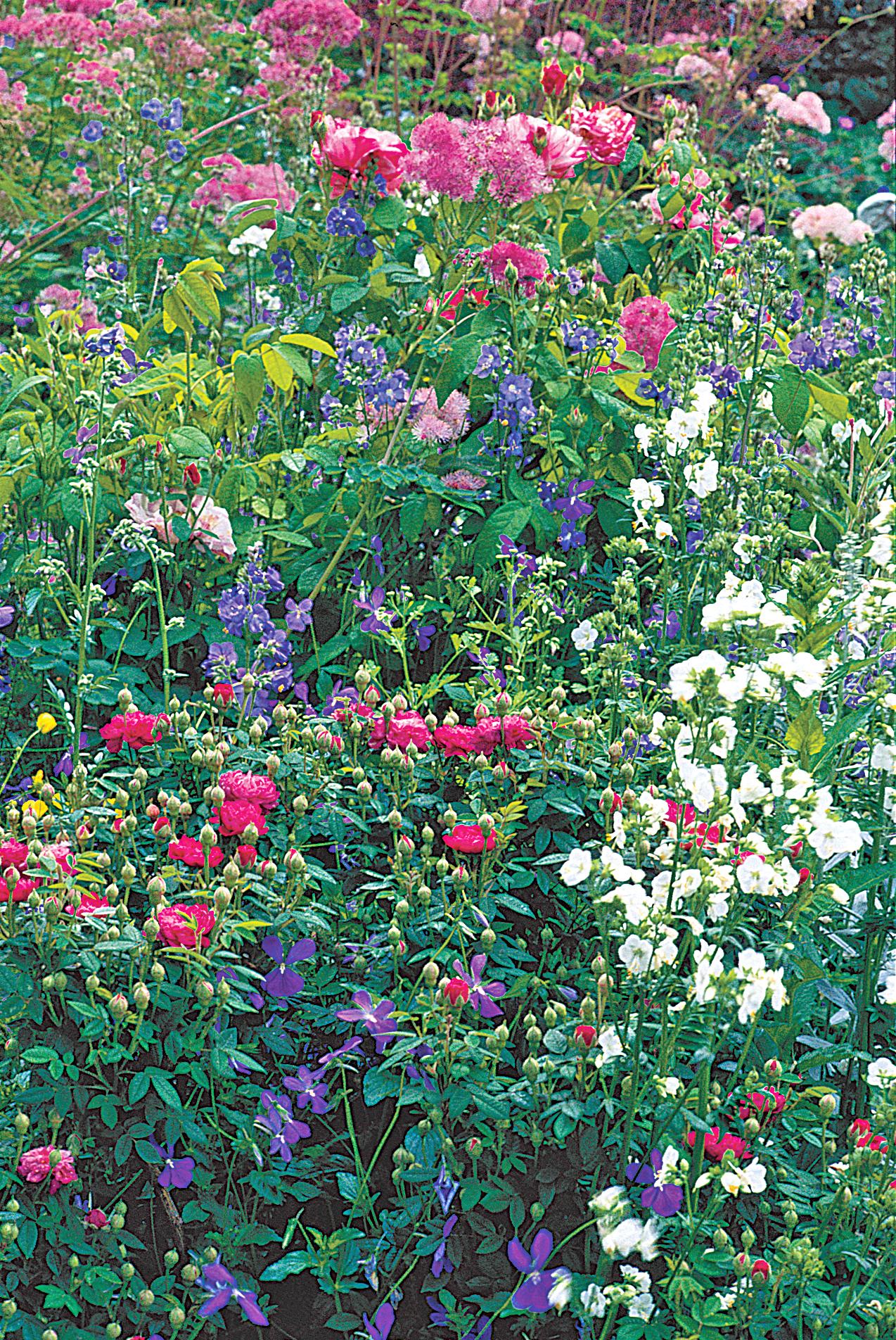 Summer Border, Broughton Castle's Garden, Banbury, Oxon, England 05.jpg