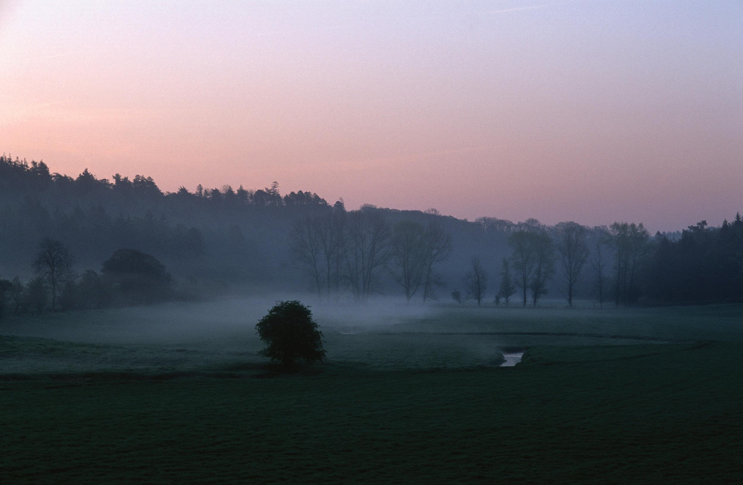 Chedworth Woods at Dawn, Chedworth, Glos.jpg