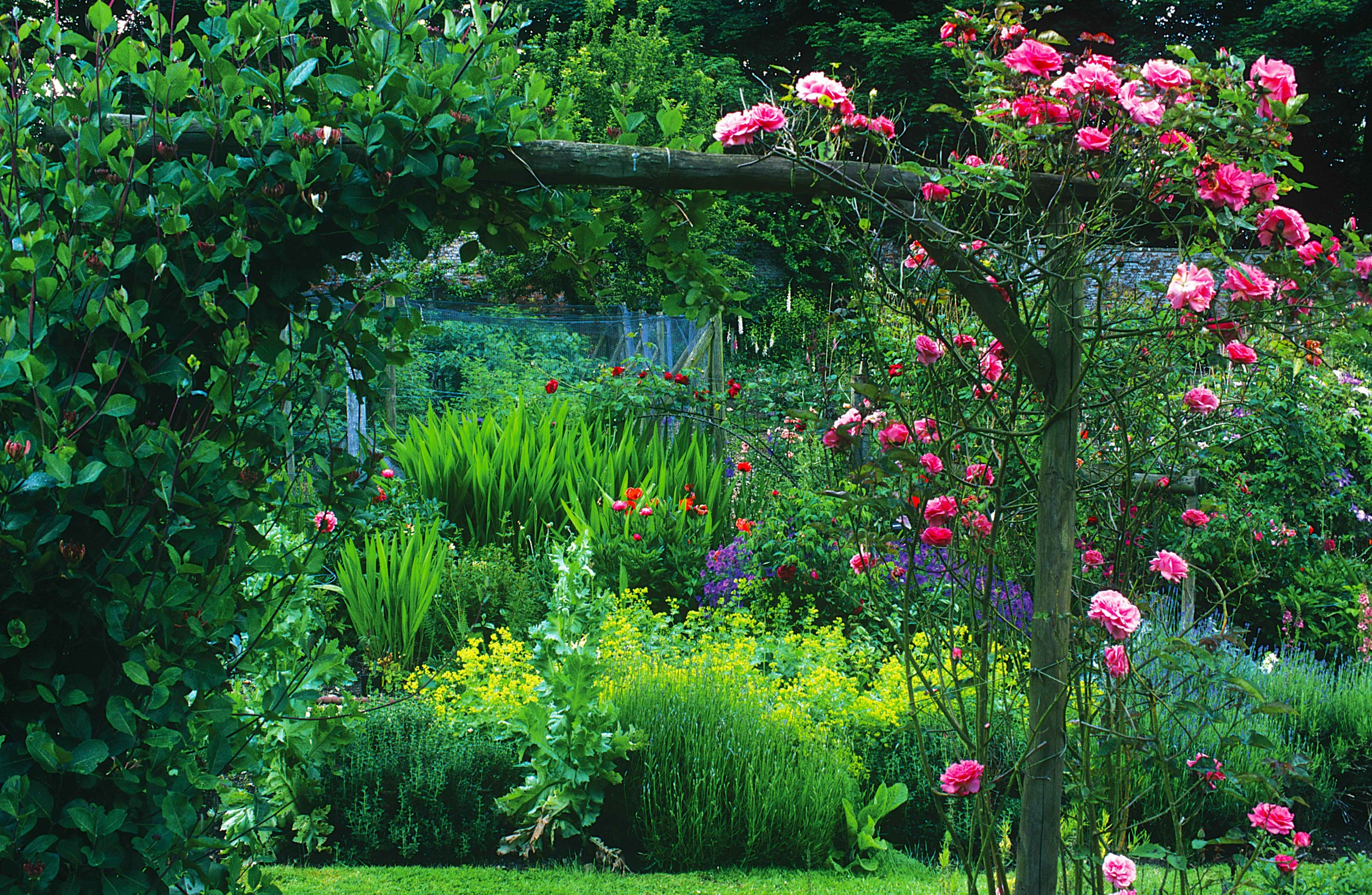 Cerney House Garden Roses.jpg