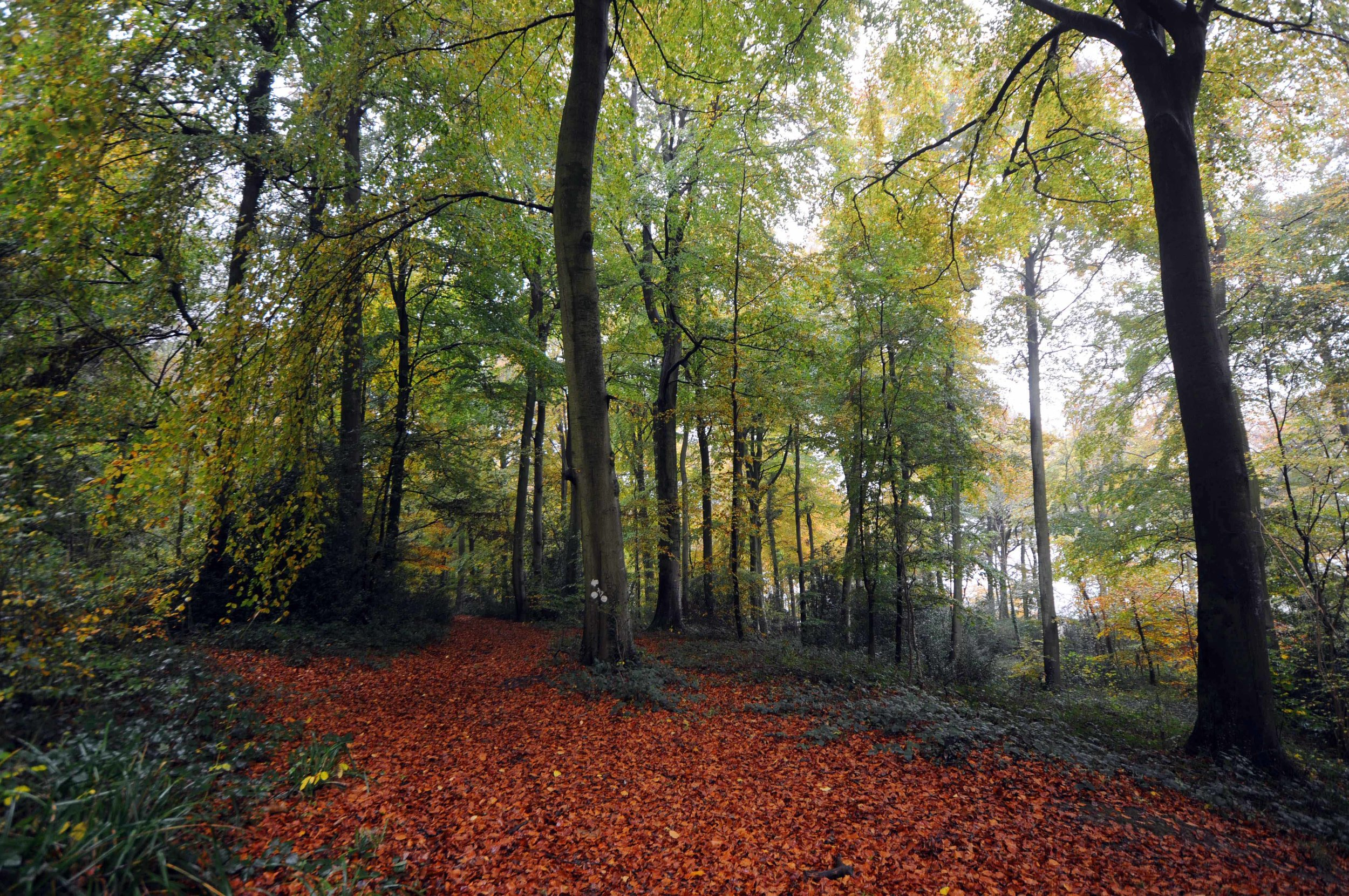 Autumn in Cranham Woods.jpg