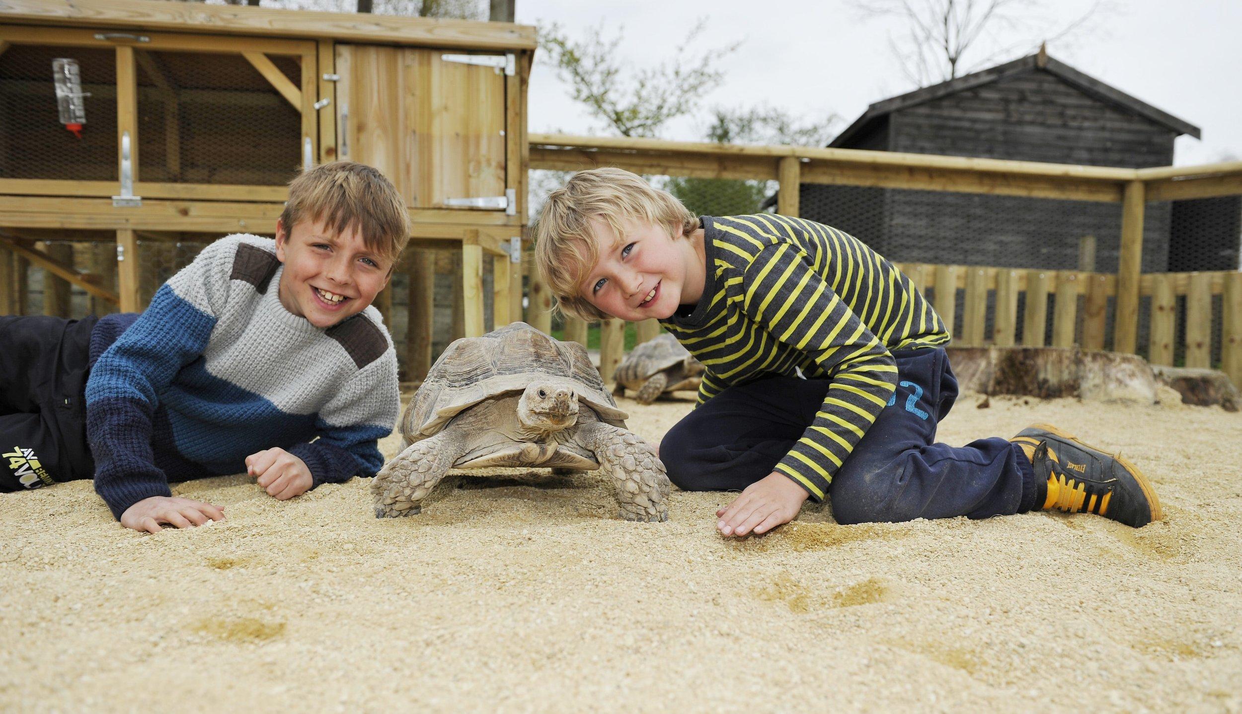 Birdland Meeting the Giant Tortoises.jpg