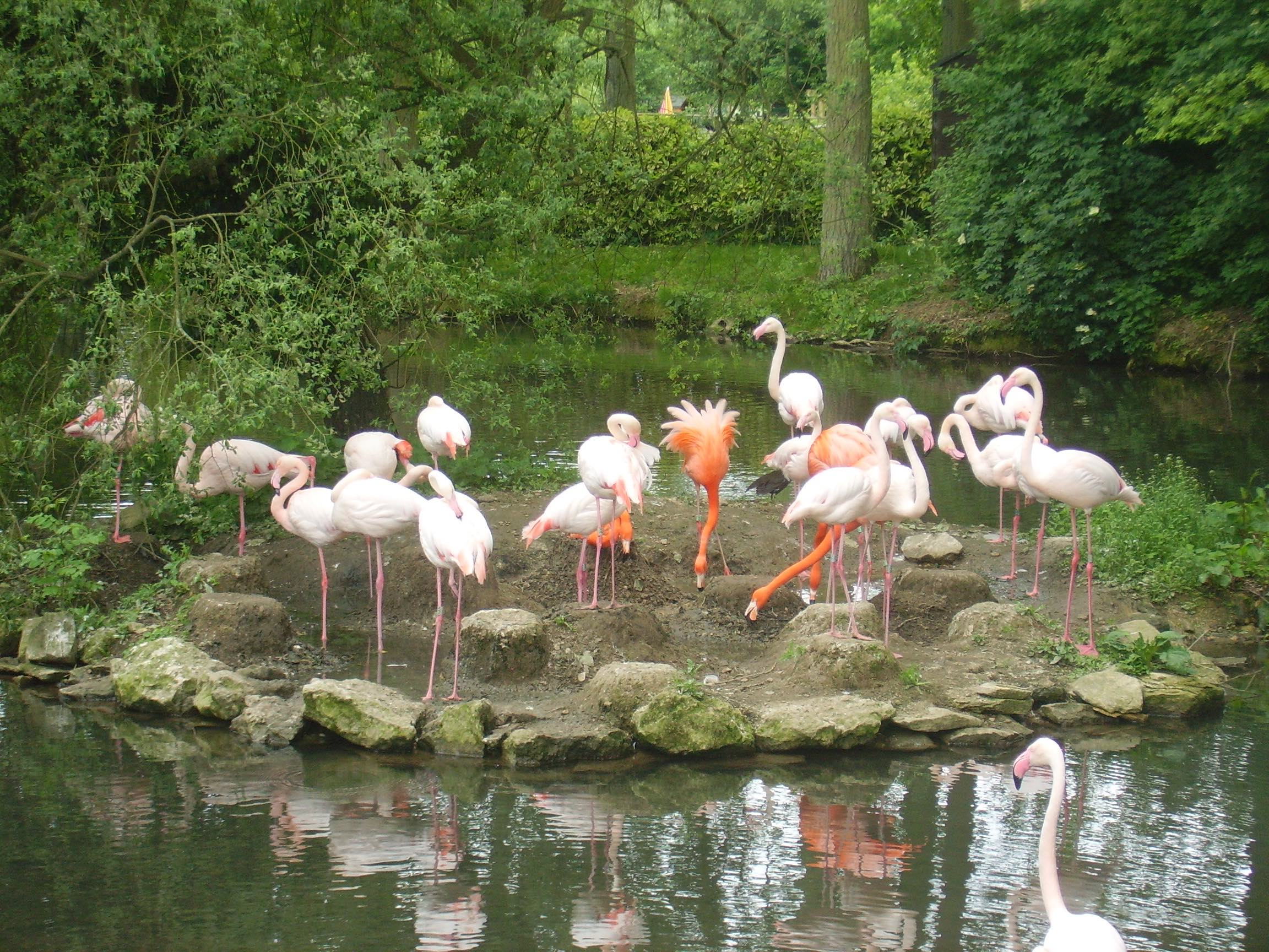 Flamingos (8).jpg
