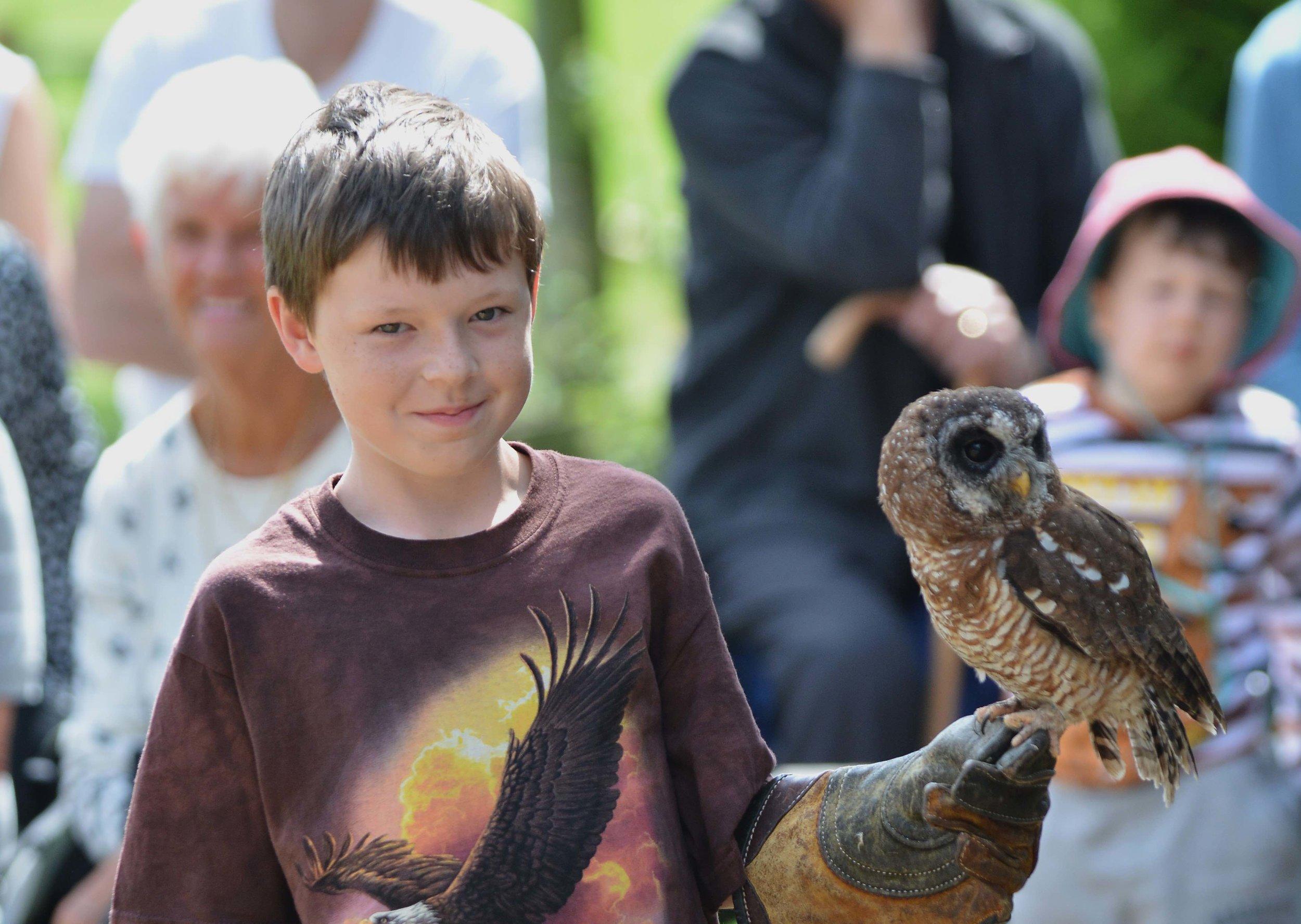 African Wood Owl (12).jpg