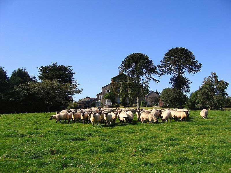 Collon-Barton-Farm.jpg