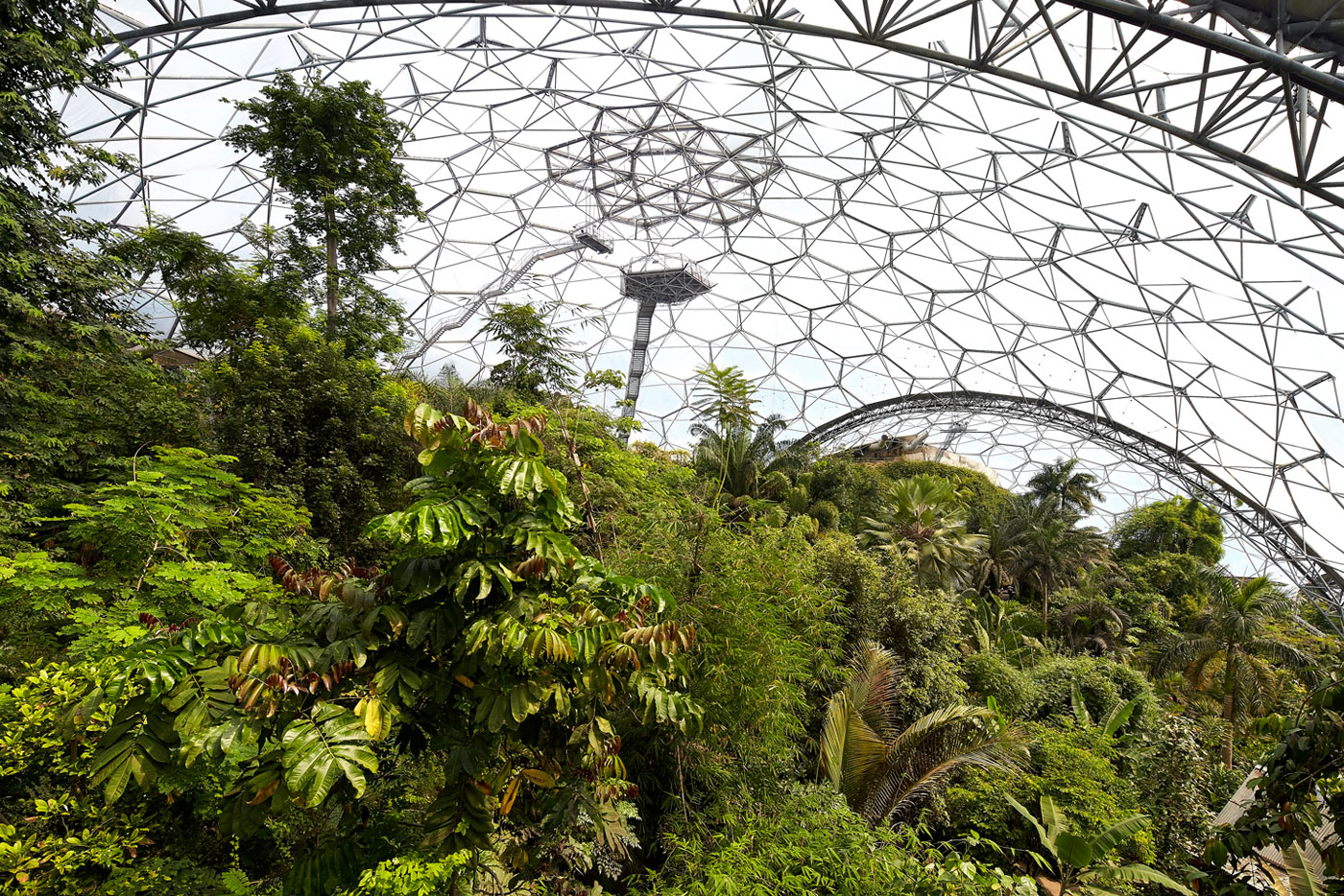 rainforest-biome-eden-project-2015-©Hufton+Crow-004-1.jpg