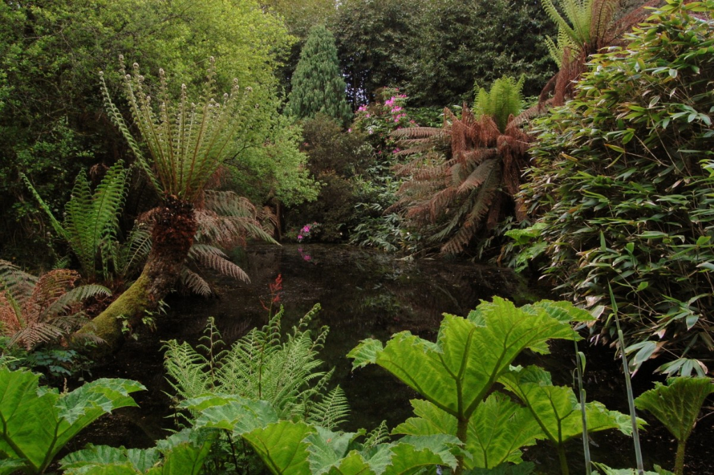 Uglix-pond-gunnera-edit-give-credit-1.jpg