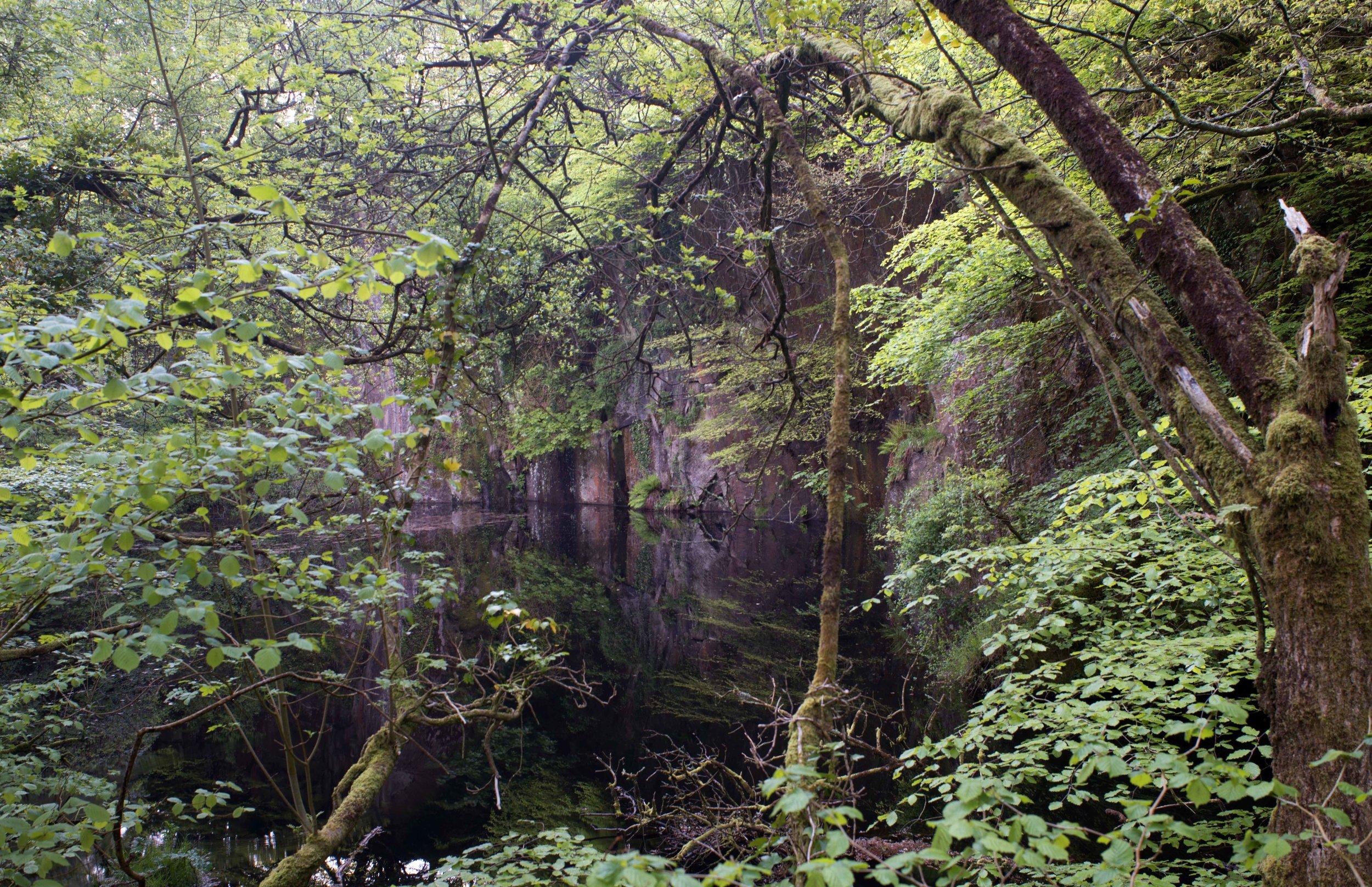 The Quarry Pond, Kennal Vale.jpg