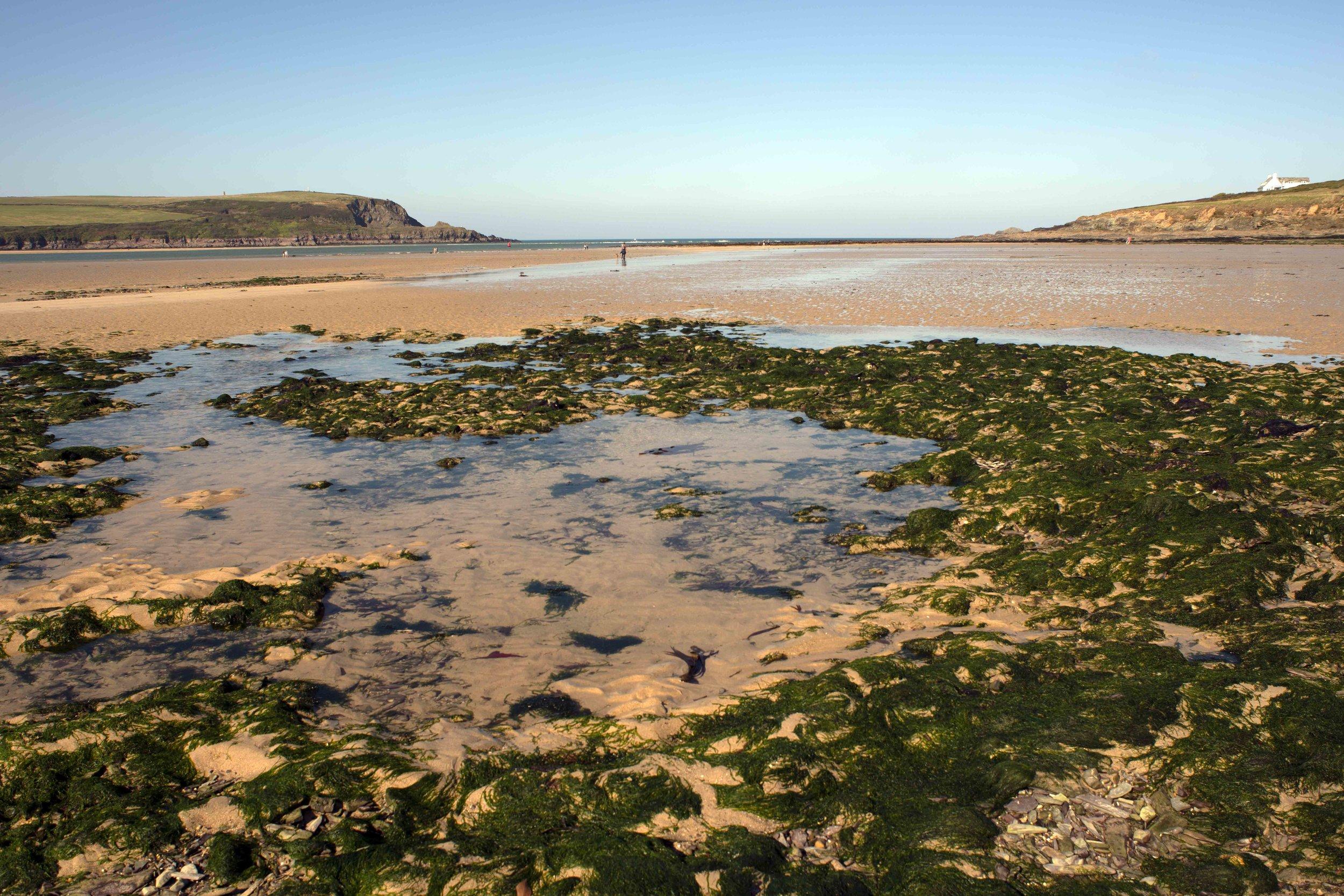 Seaweed Clusters, Daymer Bay.jpg