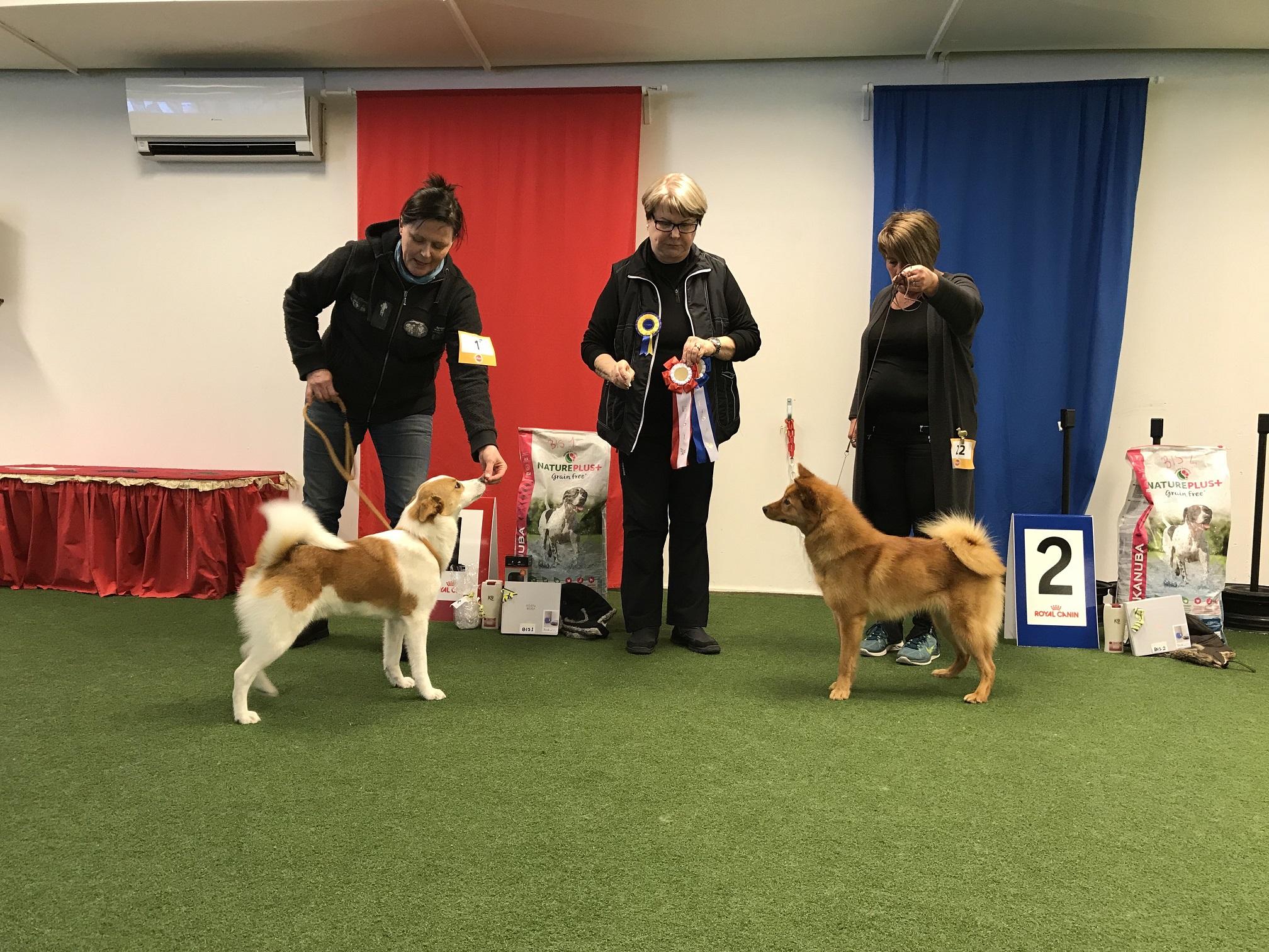 BIS 1 Raste och BIS 2 Akroyd's Bellis. Värt att nämna är att båda dessa hundar kom från juniorklassen!