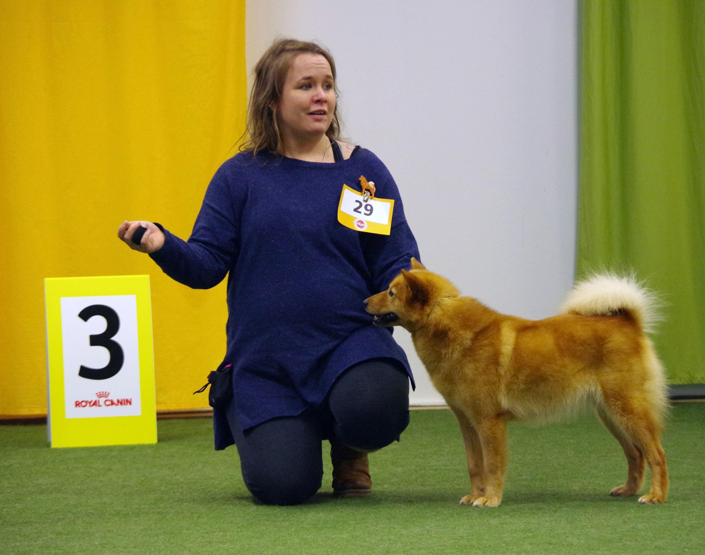 Den finska tiken Kekkeruusin Vieno fick ck och placerade sig på tredje plats i jaktklassen vilket innebar att hon även blev Svensk utställningschampion denna dag! Foto: Göran Östlund